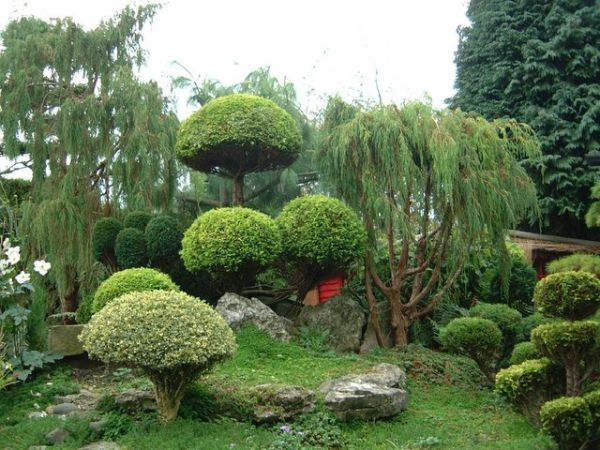 Japon Bahçesi Tasarımları 6